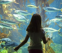 Oahu Attractions, Waikiki Aquarium, Honolulu Attractions